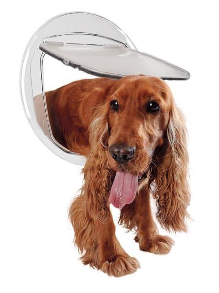 Porta-basculante-su-misura-per-cani-media-taglia-maranello